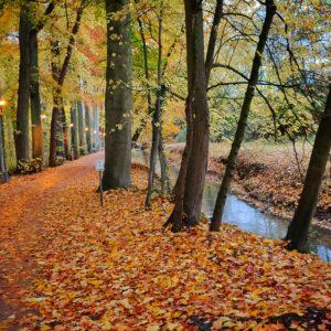 Harold Tor - dontthinktoomuch.com - The Autumn Light